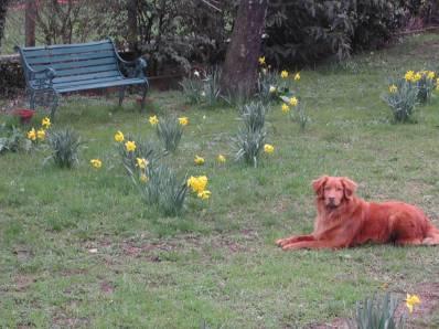 06-03-yard in spring (16)